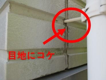 西宮市木造住宅壁こけ付着
