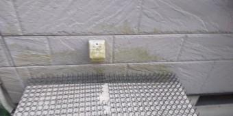 西宮市外壁窯業系サイディング表面にこけ