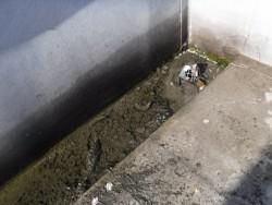 陸屋根排水溝清掃3