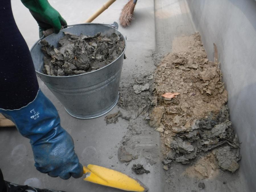 陸屋根排水溝清掃6