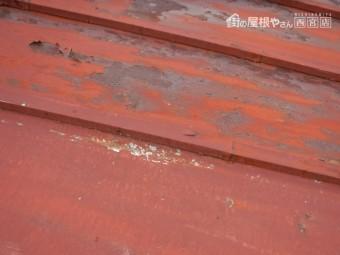 尼崎市雨漏り調査5