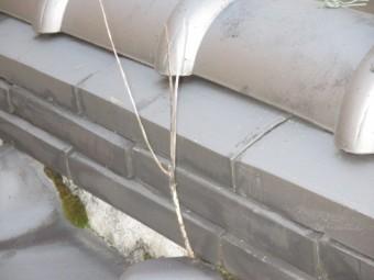 屋根から植物