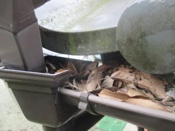 西宮市軒樋集水器葉っぱ詰まり