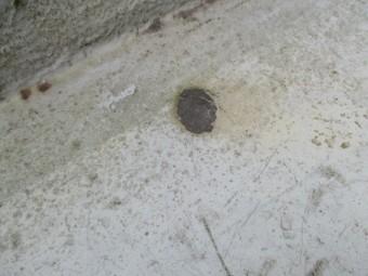 西宮市木造住宅ベランダの床が劣化で汚れている