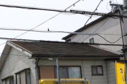 屋根カバー工事施工前