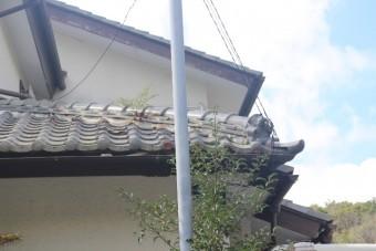 雨漏り軒天修理現場調査2