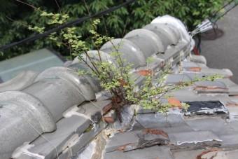 雨漏り軒天修理現場調査5