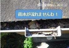 落ち葉集水器溜まる